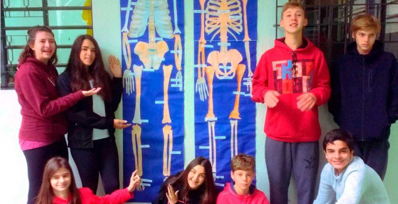 Trabalho sobre o esqueleto humano