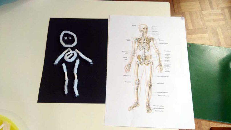 Projeto Meu Corpo - Projekt Mein Körper